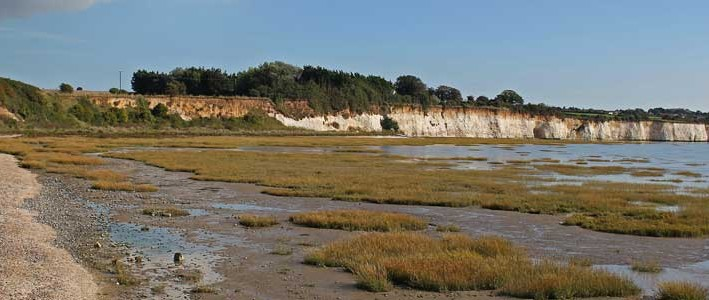 Pegwell Bay Natural History
