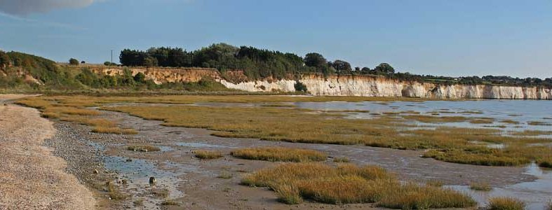 Pegwell Bay Natural History